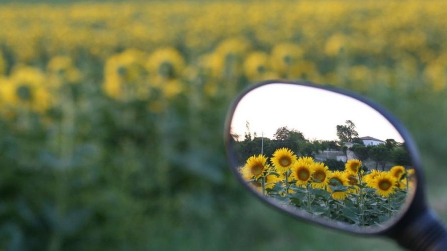 Цветы в зеркале.
