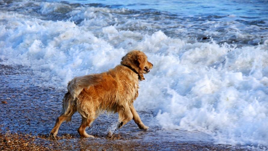 Пес на пляже.