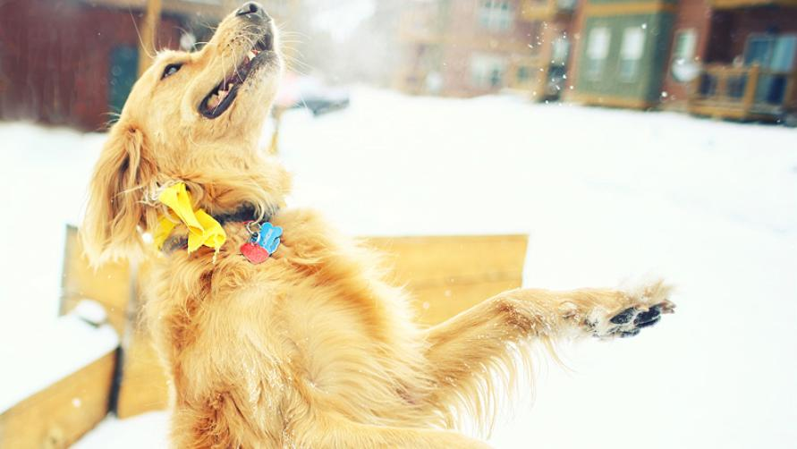 Счастливый пес.