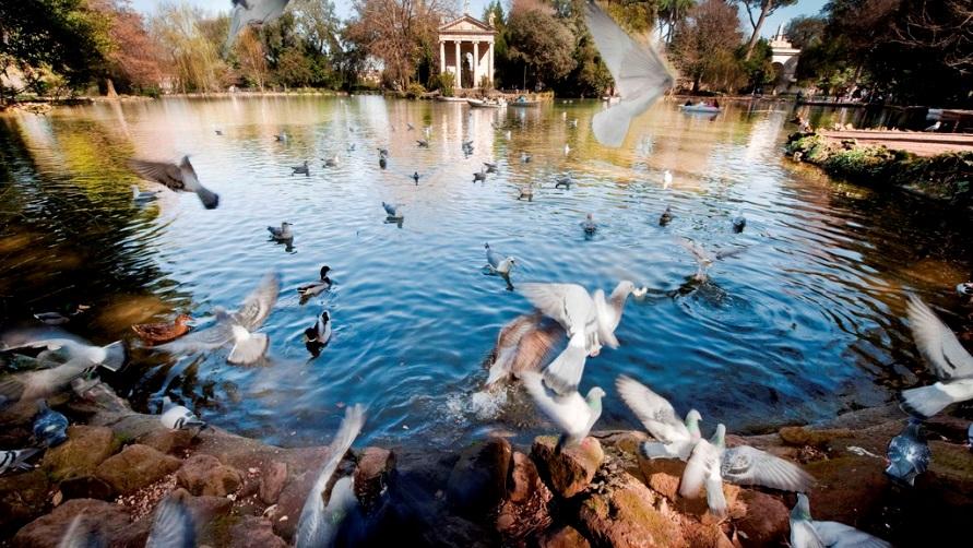 Голуби у пруда