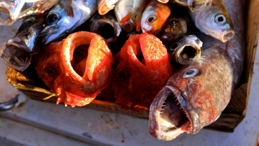 Свежая рыба