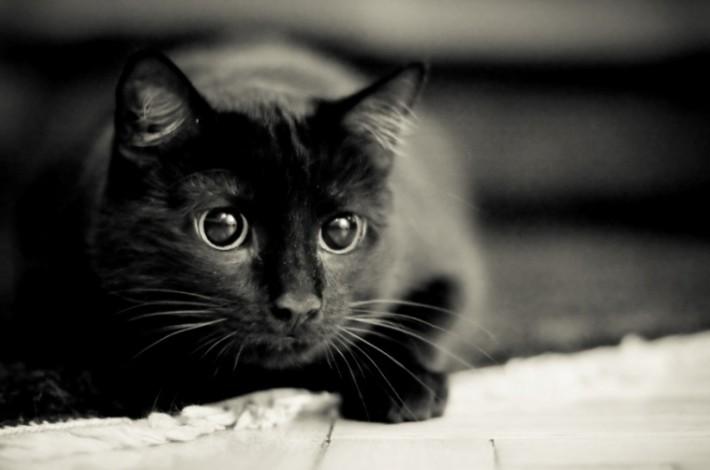 cherny-kot