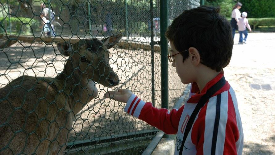 Дети в зоопарке.