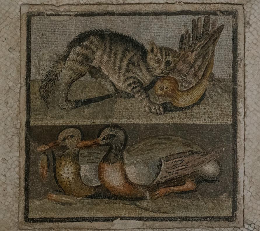Кот и утки.